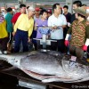 Bluefin Tuna Fishery – Taiwan 2011