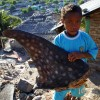 Whale Shark Fishery – Indonesia 2011