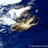 Turtles – Florida 2011