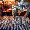 Various Fisheries – Indonesia 2012