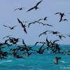 Seabirds – Mexico 2012