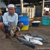 Shark Fishery – Indonesia 2010