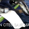 Can CITES Save Mantas