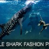 Whale Shark Fashion Prints