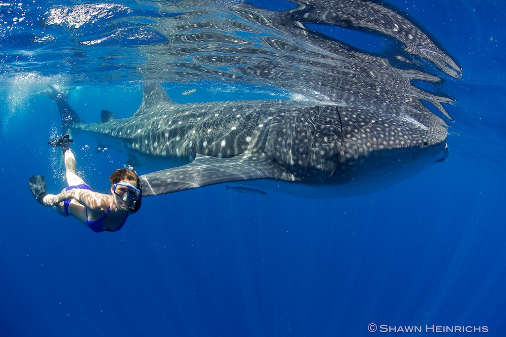 Briana Rivera with Whale Shark