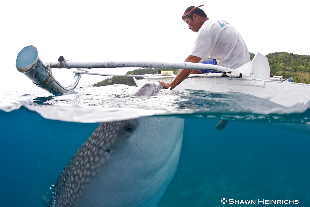 oslob philippines and the whale sharks blue sphere media