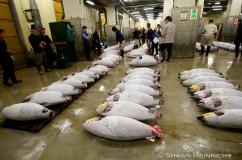 Tuna Fishery