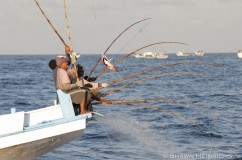 Pole and LIne Fishery