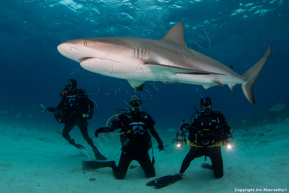 Richard Branson with Shawn Heinrichs and Sharks