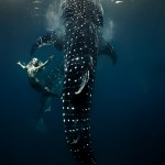 W11: Whale Shark Fashion -  The Mermaid Among Giants - Hannah Fraser