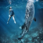 W10: Whale Shark Fashion - Bathing in Light - Roberta Mancino