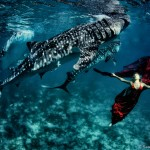 W19: Whale Shark Fashion - Company of Giants - Hannah Fraser