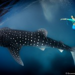 W15: Whale Shark Fashion - Leap of Faith - Roberta Mancino