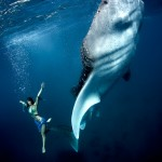 W17: Whale Shark Fashion - Giant Stride - Roberta Mancino