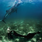 W9: Whale Shark Fashion - Look to the Sky - Hannah Fraser