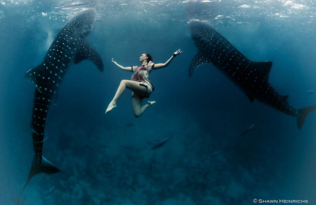 W2: Whale Shark Fashion - Two Worlds Join - Roberta Mancino