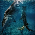 W8: Whale Shark Fashion - In Company of Giants - Hannah Fraser