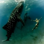 W6: Whale Shark Fashion - Dance With Giants - Hannah Fraser