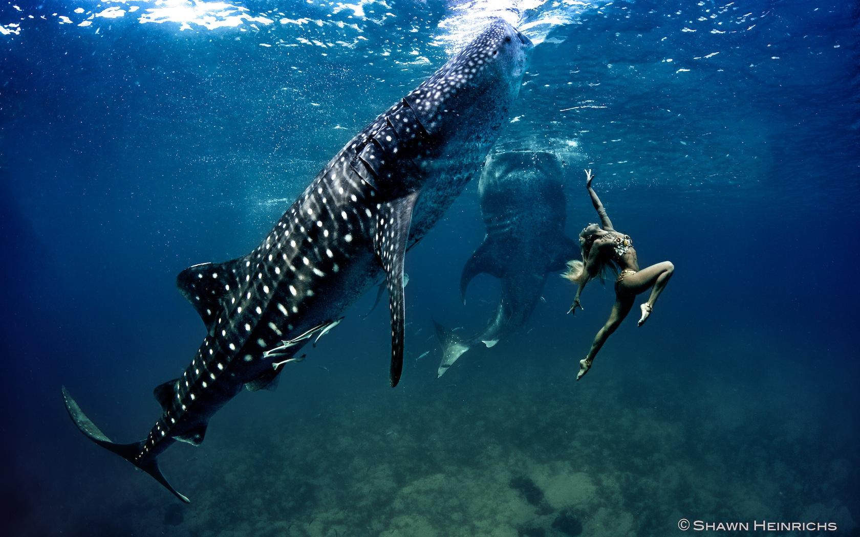 Whale Shark Fashion – Limited Prints   Blue Sphere Media