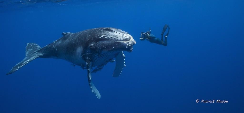 Shawn Heinrichs films a Humpback Whale calf