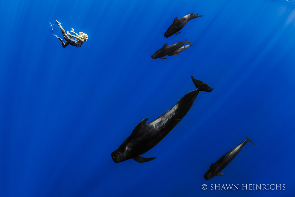 Hannah Fraser comes face-to-face with a pod of Pilot Whales