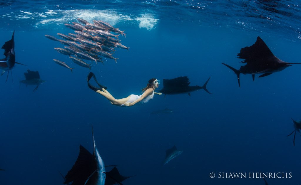 Roberta Mancino dives in the sailfish baitball