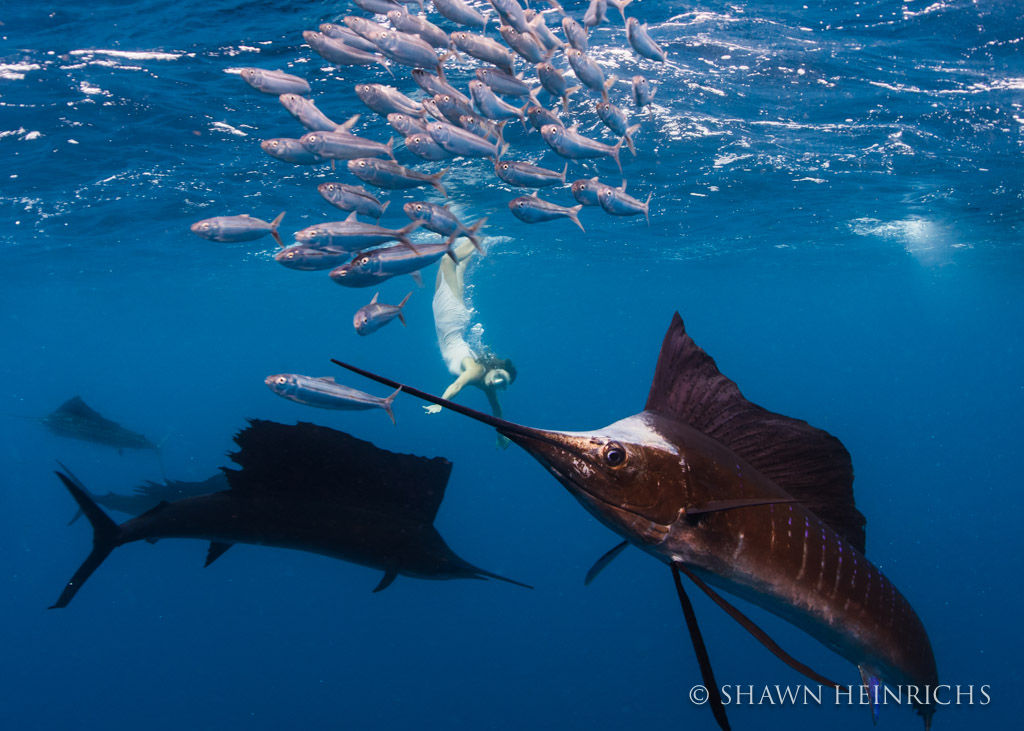 Roberta Mancino right in the action of a sailfish baitball
