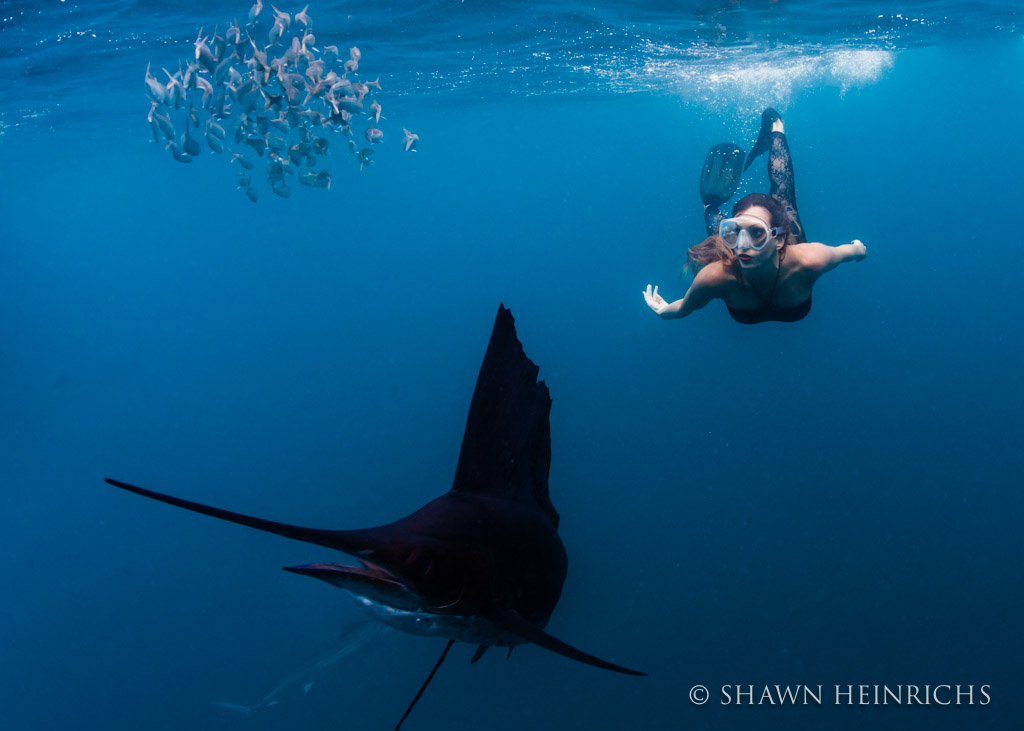 Roberta Mancino swims with a sailfish