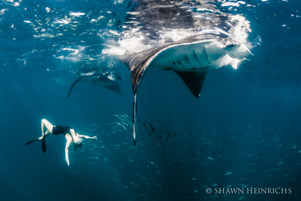Roberta Mancino dances with manta rays