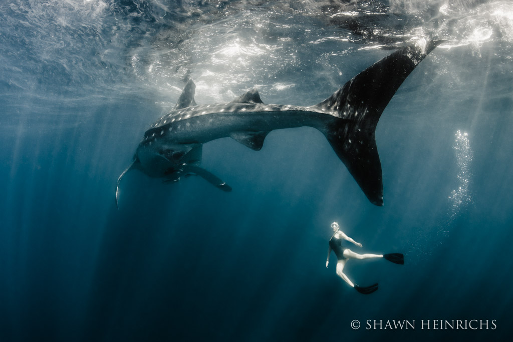 Roberta Mancino with massive whale shark