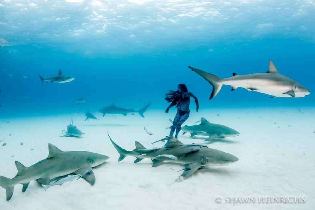 Hannah Fraser engulfed in sharks