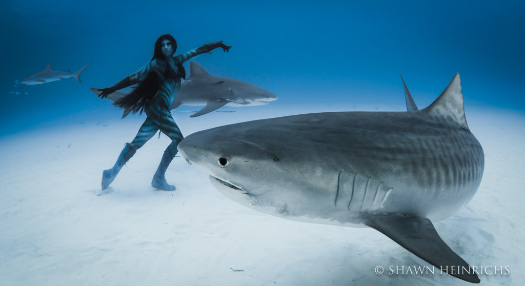 Hannah Fraser face-to-face with a 15 foot tiger shark
