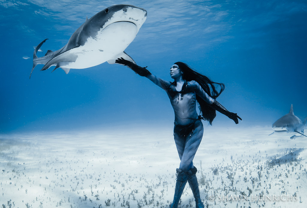 Hannah Fraser connects with a magnificent tiger shark