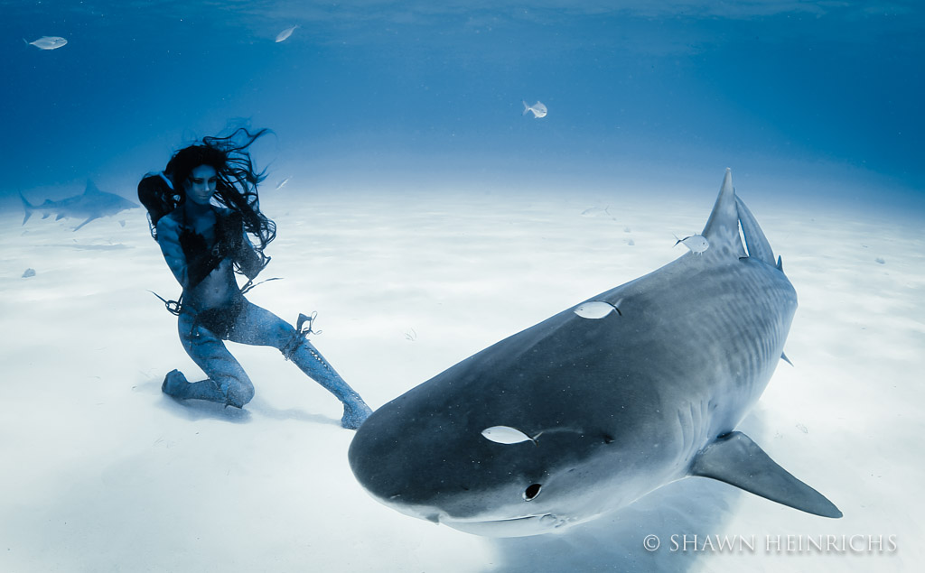 Hannah Fraser bows to a massive tiger shark