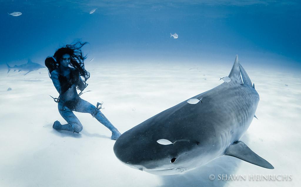 Hannah Fraser bows to a massive tiger shark