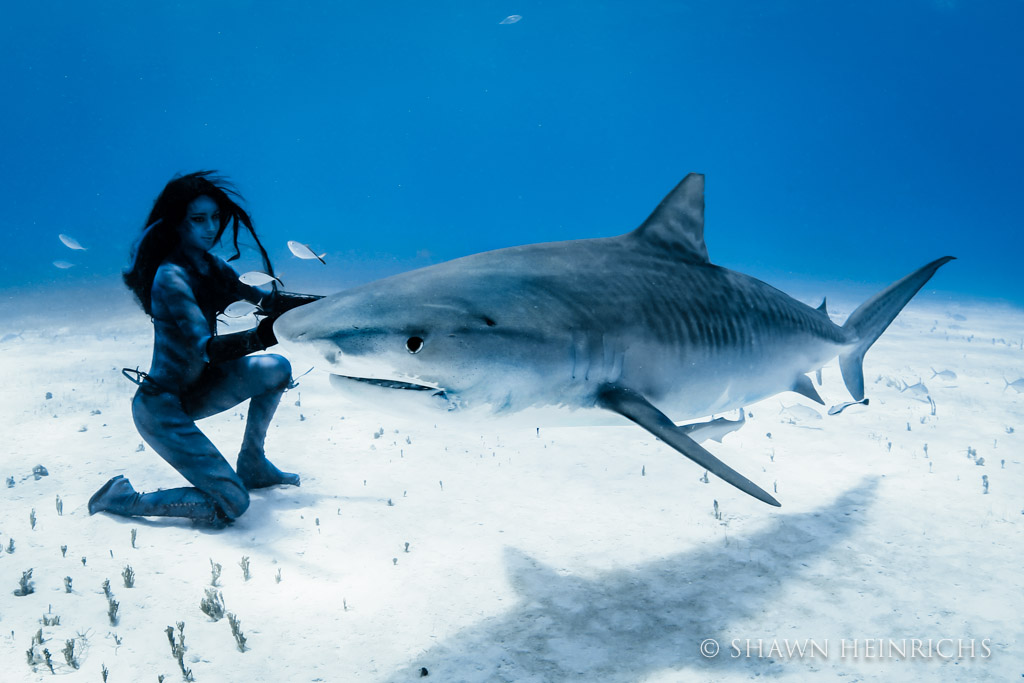 Hannah Fraser face-to-face with a large tiger shark