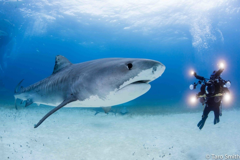 Shawn Heinrichs with Light & Motion Sola 4000's and 2500's a blazing
